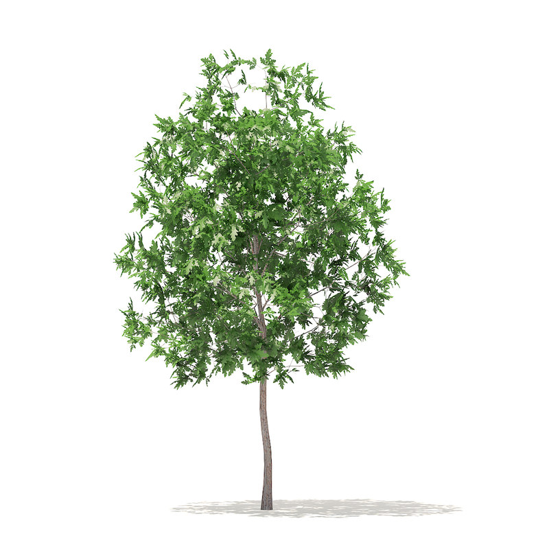 Trees 3D Models Collection Volume 100 Corona(1)