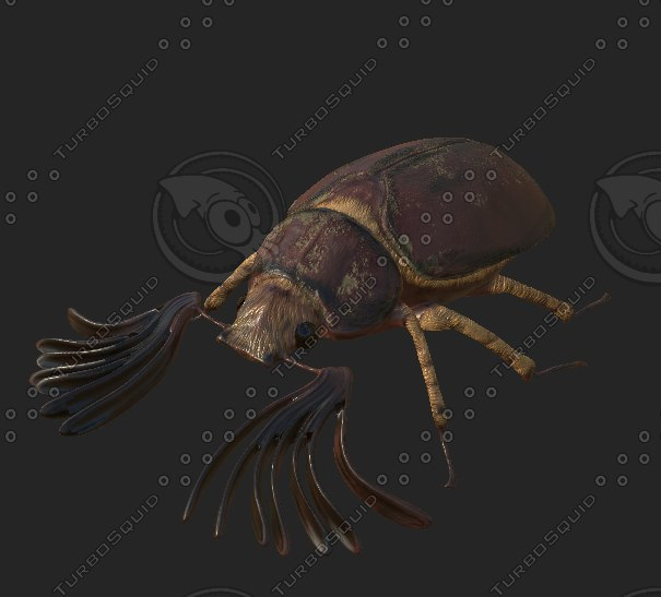 3D model high-quality beard beetle