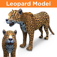 leopard 3D Models game ready