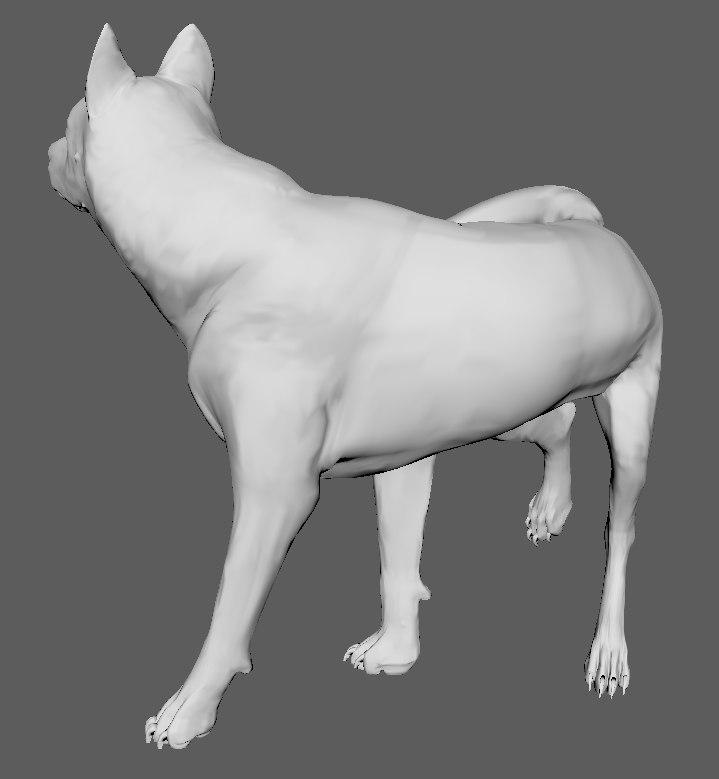 wolf animal wildlife 3D model