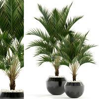 3D plants 95 model