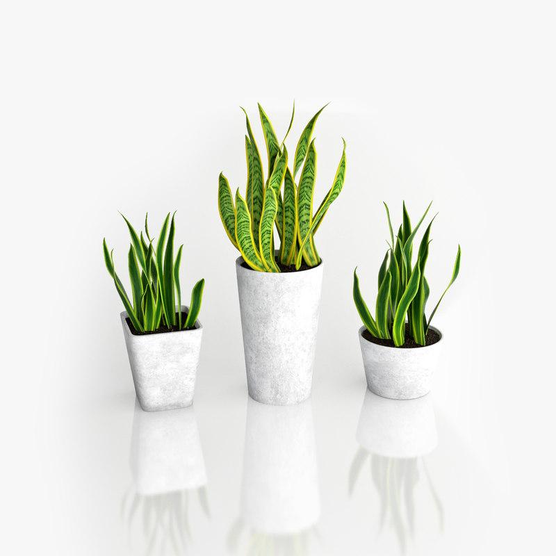 snake plant 3D model