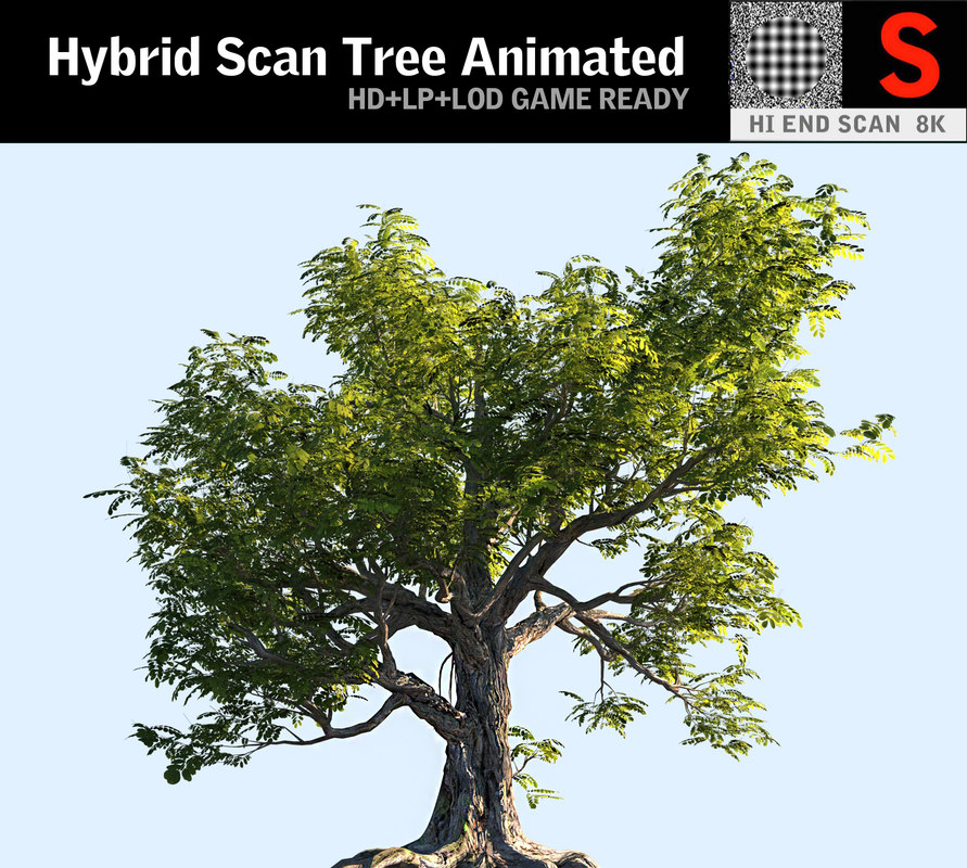 3D model tree scanned ready