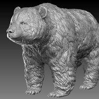 3D panda bear realistic