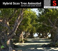 Acacia Tree Animated