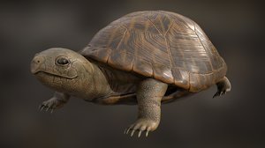 turtle rigging animation 3D model