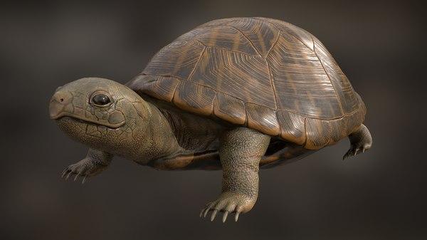 turtle rigging animation 3D model