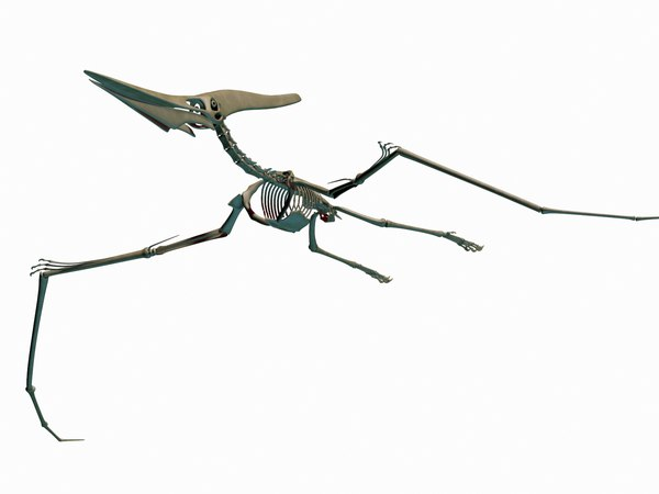 pteronodon skeleton dino 3D model