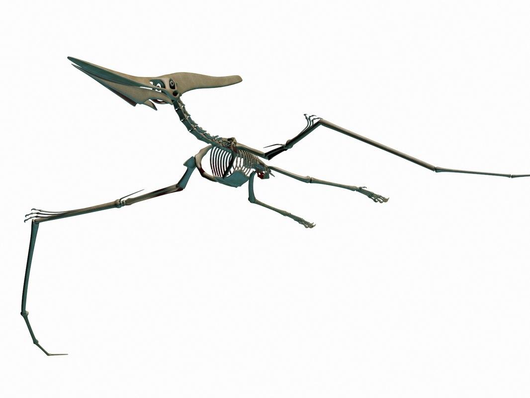 pteronodon skeleton dino 3D model