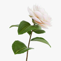 3D blooming flower camelia