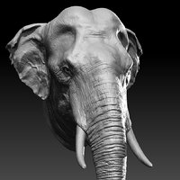 3D asian elephant head model