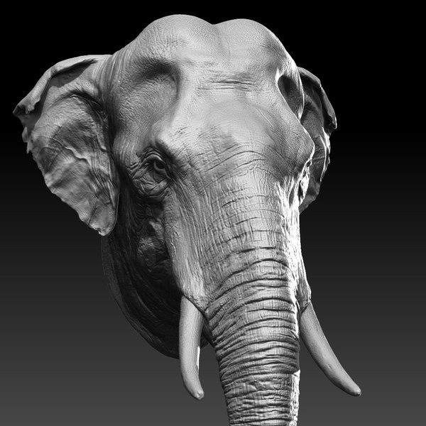 3D asian elephant head model