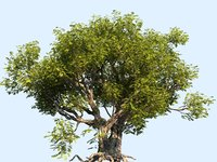tree scanned ready 3D