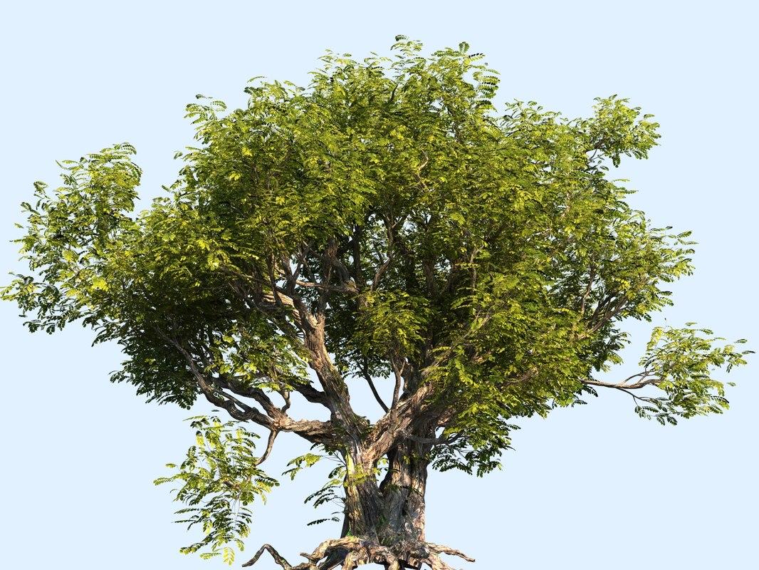 tree scanned ready 3D