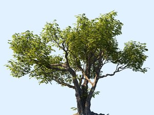 tree scanned ready 3D model