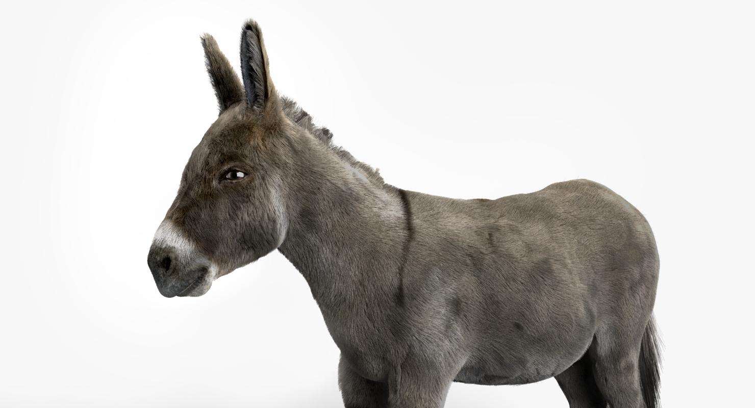 3D model realistic donkey