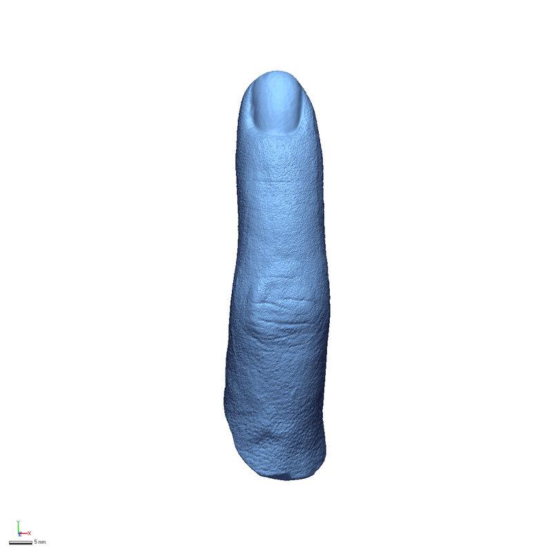 3D model body parts