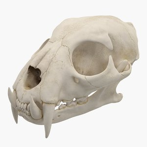 3D model tiger skull