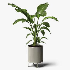 strelitzia plant 3D model