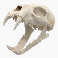 bengal tiger skull 3D
