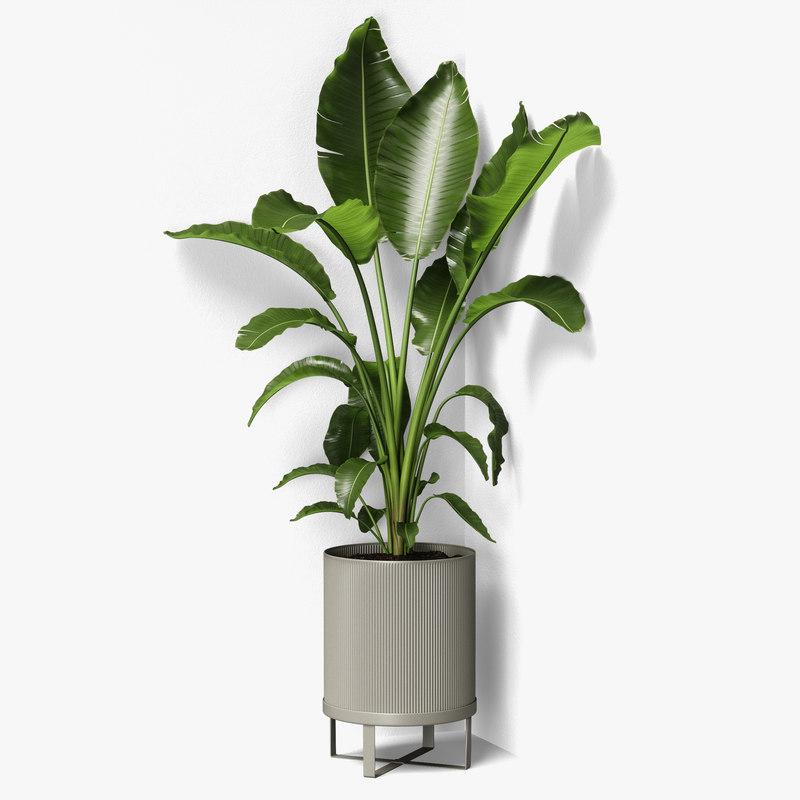3D strelitzia plant angled model