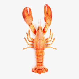 3D cooked lobster