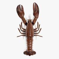 3D lobster homarus americanus