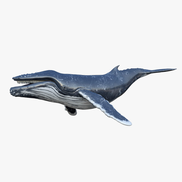 3D humpback whale animations