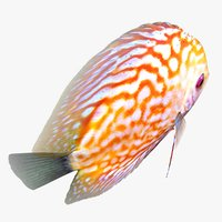 3D model discus fish 2 animation