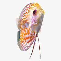 discus fish 2 rigged 3D model