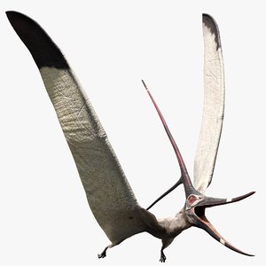3D cretaceous pterosaur nyctosaurus