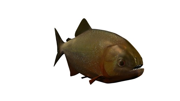 piranha fish 3D model