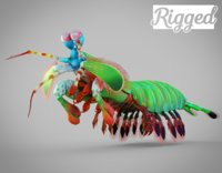 Mantis Shrimp Rigged