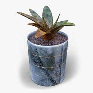3D small cactus
