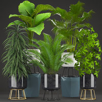 3D schefflera ficus palm tropical plants model