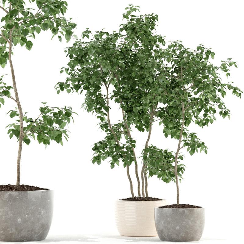 plants 96 model