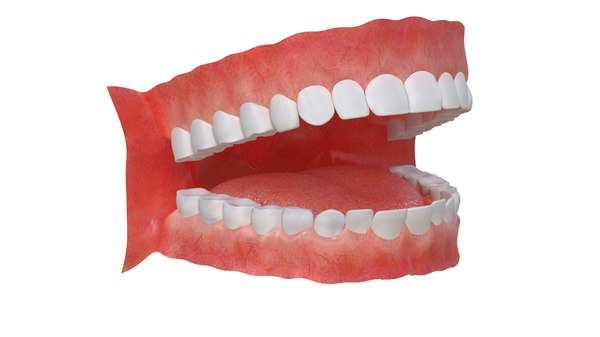 3D mouth anatomy model
