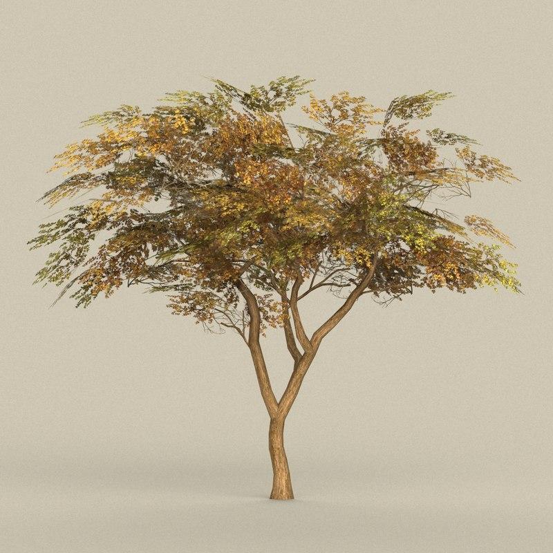 ready tree model