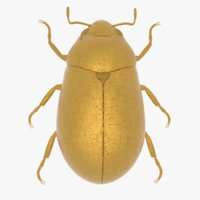 3D gold scarab abdornment