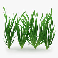 Vallisneria Spiralis Background Aquarium Plants Set