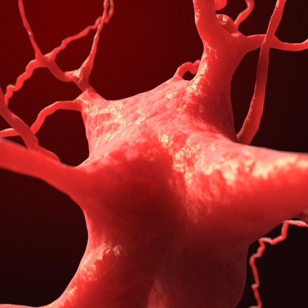dendrite neuron cell 3D model