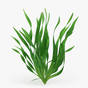 eel aquarium grass 3D model