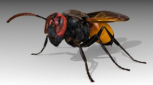 3D hornet animations model