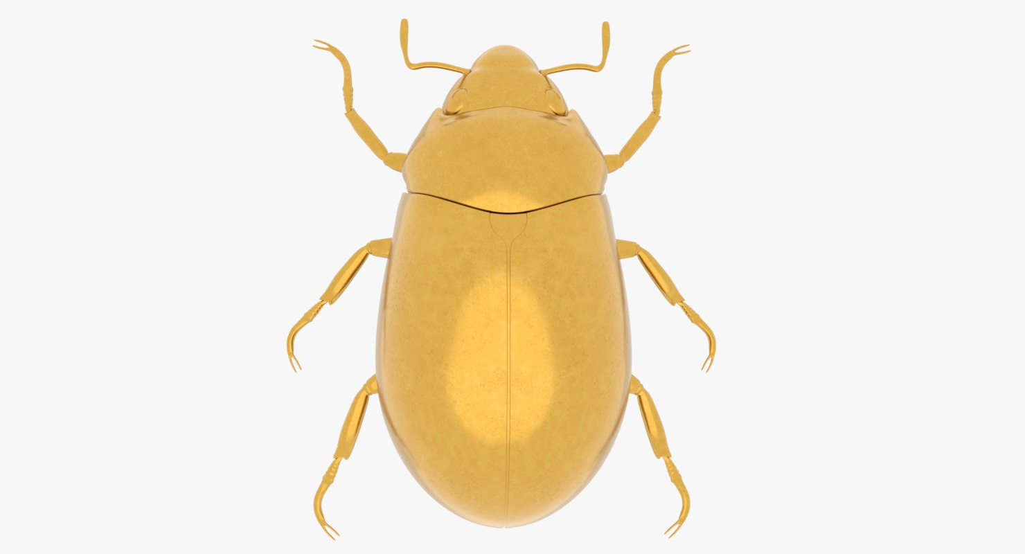 gold scarab beetle 3D model