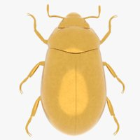 gold scarab beetle 3D model