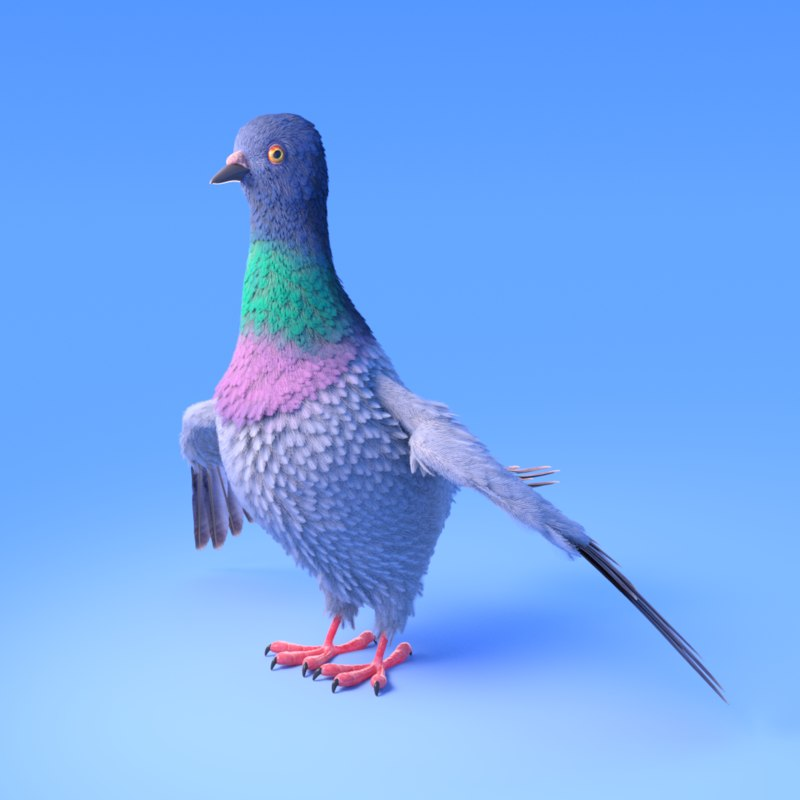 pigeon feather 3D