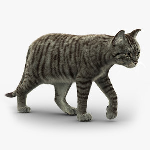 3D cat fur 2 model