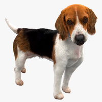 beagle dog rigged model