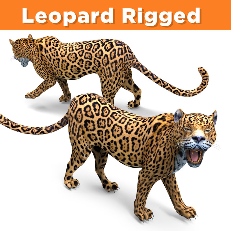 Leopard rigged
