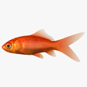 3D goldfish scanline ready model